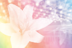 Soft blur lily flower Royalty Free Stock Photo