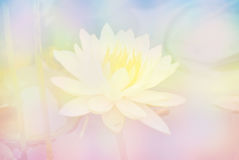 Soft blur Lotus flower in pastel colors sweet background.  Royalty Free Stock Photos