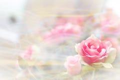Soft blur pink rose Royalty Free Stock Image