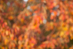 Soft, blurry, photographed bokeh background Stock Photo