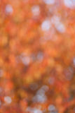 Soft, blurry, photographed bokeh background Stock Photography