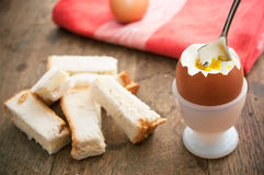 Soft boiled egg in egg cup and served with toast fingers Royalty Free Stock Photo