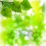 Soft Bokeh Background with Birch Leaves Stock Photo