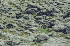 Soft carpet of moss covered stones in Iceland, in summer, vintag. E effect with some grain Stock Photography