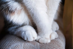 Soft cat paws. The cat sits and looks out the window in anticipation Royalty Free Stock Image