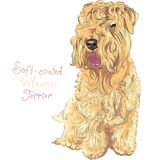 Soft-coated Wheaten Terrier dog. Cute funny dog Soft-coated Wheaten Terrier breed sitting vector Royalty Free Stock Photos