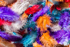 Soft Color Feathers. Bright and colorful mixture of soft feathers Stock Photography
