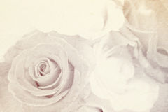 Soft color rose on mulberry paper texture for romantic background Stock Images
