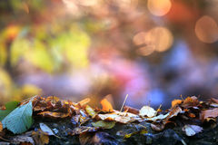 Soft colored autumn background Stock Photos