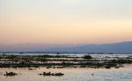 Sunset on Inle Lake. Soft colors of sunset drift across the vegetation spotted Inle Lake in Myanmar Royalty Free Stock Photography