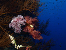 Soft coral. Reef in the red sea Stock Photography