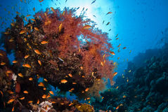 Soft coral. On reef beneath the surface Stock Photo