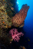 Soft coral and barrel sponge in moyo island royalty free stock image