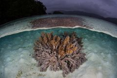 Soft Coral Colony and Rain Clouds in Raja Ampat Stock Photo