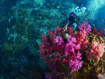 Soft coral with diver Stock Photo
