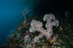 Soft Coral on Edge of Reef Royalty Free Stock Photo