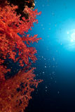 Soft coral and ocean Stock Photography