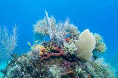 Soft Coral Sea Scape stock image