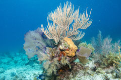 Soft Coral Sea Scape stock images