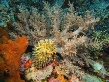 Soft coral Stock Images