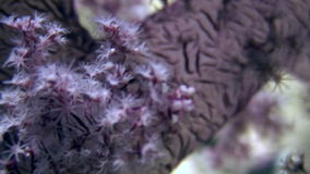 Soft coral underwater on background marine landscape in Red sea. stock video
