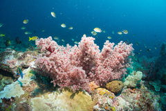 Soft Coral. In underwater world Stock Image