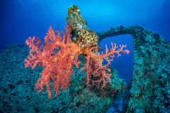 Soft coral wreck scene Stock Photography