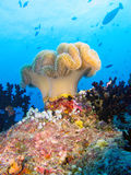 Soft corals. Colorful group of soft corals in the maldives Royalty Free Stock Image