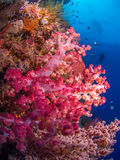 Soft corals Stock Photo