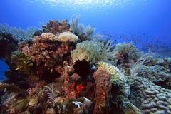 Soft corals (dendronepthya) Stock Photos