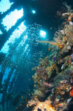 Soft corals and glassfish inside a large shipwreck Royalty Free Stock Photos