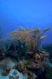 Soft Corals near Cayo Largo, Cuba Stock Images