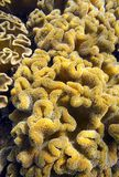 Soft corals tropical reef underwater stock images