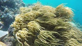 Soft corals in tropical sea stock video