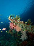 Soft corals on USAT Liberty Stock Photos