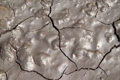 Soft cracked earth background. Royalty Free Stock Photography