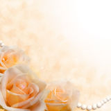 Soft cream roses on blurred background Royalty Free Stock Photo