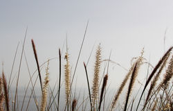 Soft dry grass, blurred background with the sea Stock Photos