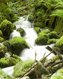 Soft Fall. Mossy waterfall in the pacific northwest Royalty Free Stock Photography