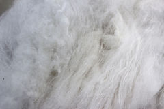 Soft fiber for silk. Stock Photography