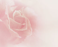 Soft Floral Background Stock Photos