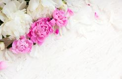 Soft Flower background with peony Royalty Free Stock Photography