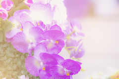 Soft flower color Abstract background. Stock Photo