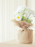 Soft flower Royalty Free Stock Photos