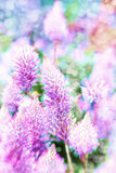 Soft flowers Royalty Free Stock Photo