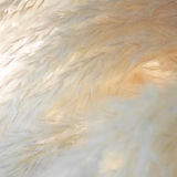 Soft and fluffy decorative dry feather grass Royalty Free Stock Photos
