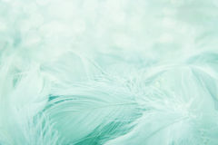 Soft fluffy feathers Stock Images