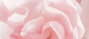 Free Soft Focus, Abstract Floral Background, Pink Rose Flower Petals. Macro Flowers Backdrop For Holiday Design Royalty Free Stock Images - 195774149