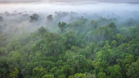 A soft focus, aerial view of a forest on a misty morning, shot from a hot air balloon in the Masai Mara of Kenya. royalty free stock photo