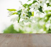 Soft focus background with green leaves, spring flowers. And gray wood texture Royalty Free Stock Image